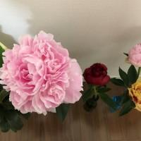 でっかい花束 A big bouquet