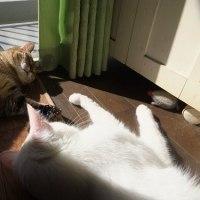 猫の手を、借りてみた
