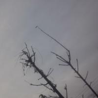 仙台の空1月21日、土曜日
