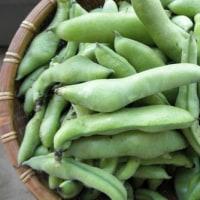 私が作った空豆、そらまめ、ソラマメくん