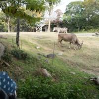 元気が一番 動物園に行って散々遊んだら、帰りに眠くなった