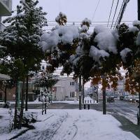 日中、一気に雪が降った旭川。。。