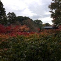 定点観測?東福寺の紅葉