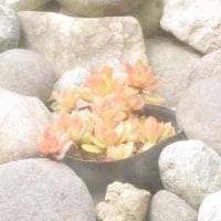 【多肉生活】タニクちゃん訪問記 in 夢の島熱帯植物館