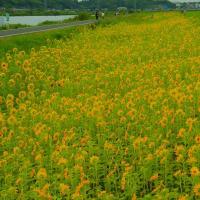 デジブック 『庭に咲く花 4の2』
