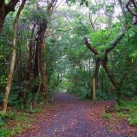 奄美大島の旅ー7