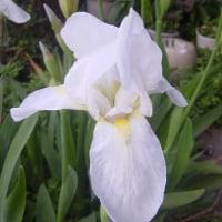 我が家の庭にも春が