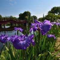 佐賀大和菖蒲園からp2(D810,18-35mm)