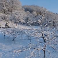 美しいけさの雪景色