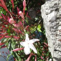 紅シジミ蝶と街の花 -3