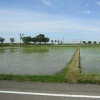 加賀平野の田植え
