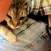 猫小屋の大黒柱・チビ母さんの14歳のワクチン注射に行ったつもりが…なんと…