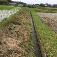 大雨前に田植えを無事終えることができました。