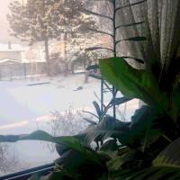 春よ、来い・・今日は