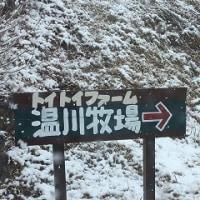 雪積もる。。。