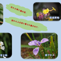 次々咲く庭の花