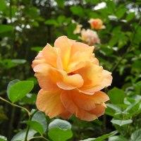 布引ハーブ園の花々