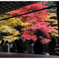京都 2016 秋 12