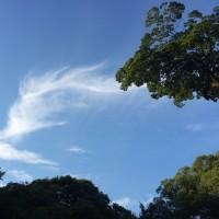 空から羽が落ちてきた!