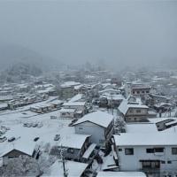 11月の雪降り