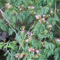 ガマ、 県立三木山森林公園