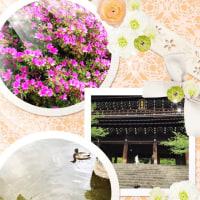 京都。スイーツ&お散歩。*美バレエ・エクササイズ
