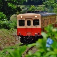 小湊鐵道とアジサイ