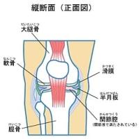 ひざの骨と関節