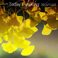 Today's walking