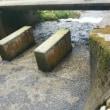 仙見川にて