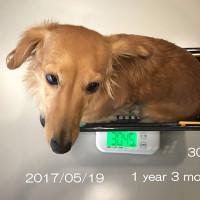 「ニコ」今日で1歳三ヶ月!