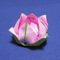 折り紙の蓮の花