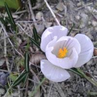 花は咲いていた