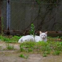今日の一枚【today's shot】 ネコちゃん(cat)