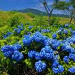 霊仙寺湖の紫陽花