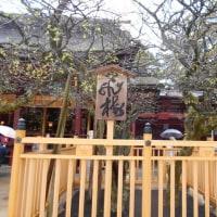 にっぽん丸  春の喜界島・沖縄クルーズ