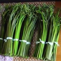 ワラビ採り・春の酵素づくり・山荘の除草