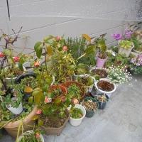 春雨と玉の浦椿