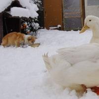 雪の中で。
