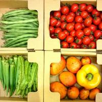 日替わりマルシェ「沖縄産直 野菜屋 元」さんの野菜&果物入荷してます♪