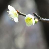 Gifu/ Bairin Park (梅林公園)