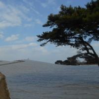 ロウバイ咲く海浜公園見て歩く