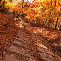 秋をくぐって。