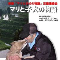 中越地震で3匹の子犬守り抜いた母犬マリ死ぬ