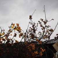 田舎の残花