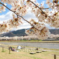 桜sakura.駆けてくる。