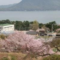 桜風景3様