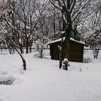 春の雪~♪