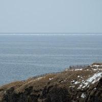 沖に流氷流れラッコ貝を食う