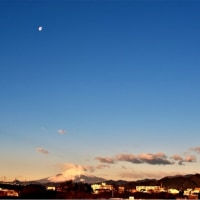16/Jan 名残の月と富士山と菜の花とノスリ